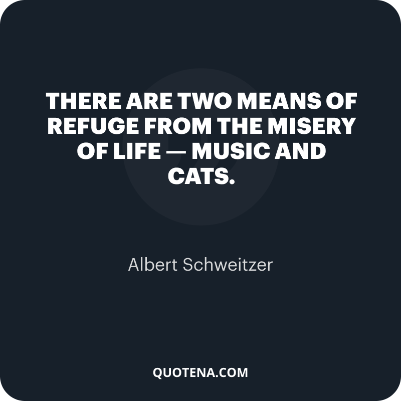 """""""There are two means of refuge from the misery of life — music and cats."""" – Albert Schweitzer"""