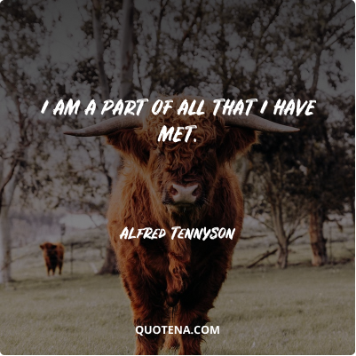 """""""I am a part of all that I have met."""" – Alfred Tennyson"""